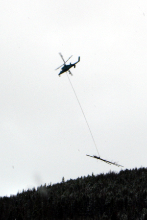 Removing lodgepole pine trees killed by mountain pine beetles using a helicopter (shown here in the Matterhorn neighborhood last fall) is just one tool in the battle against the beetle infestation. Vail officials hope a new repellant injection will help them save thousands of healthy trees.