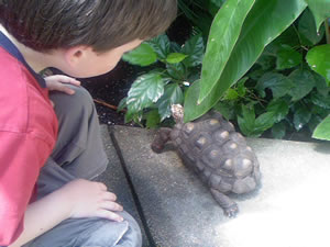 Nick Williams gets up close and personal with a turtle at the Denver Butterfly Pavilion, which will present a bevy of bugs at the Vail Nature Center July 9. And in the below video, Nick handles Rosie the tarantula.