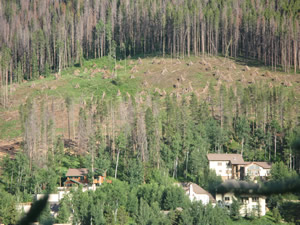 Wildland firefighting crews from Vail, the U.S. Forest Service and Eagle County have been working hard to create this defensible 150-foot space above homes in the West Vail neighborhood.