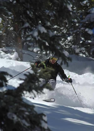 Tree-skiing scenes like this one at Beaver Creek will change dramatically over the next decade as the White River National Forest is massively transformed by a massive mountain pine beetle epidemic.