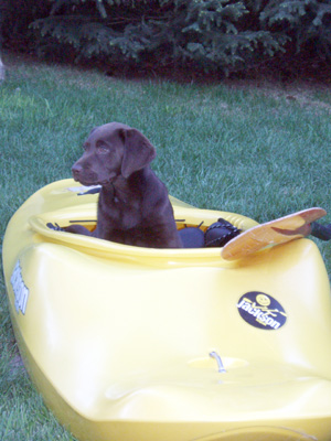 My dog wants to go kayaking