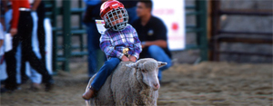 The Beaver Creek Rodeo, which includes the ever-popular mutton-bustin' children's event, gets under way each Thursday starting June 12.